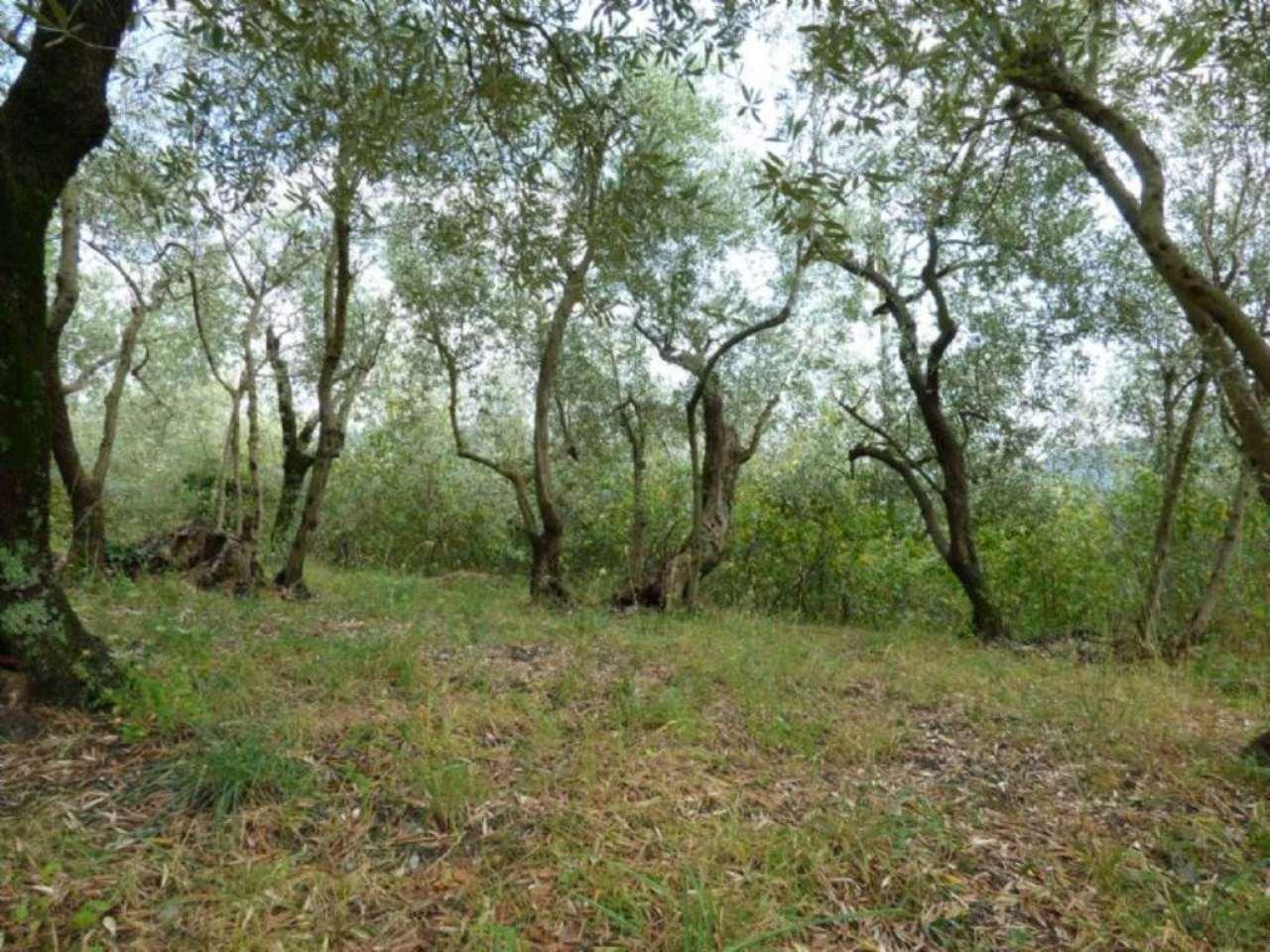Terreno Agricolo in vendita a Uscio, 1 locali, prezzo € 19.000 | Cambio Casa.it