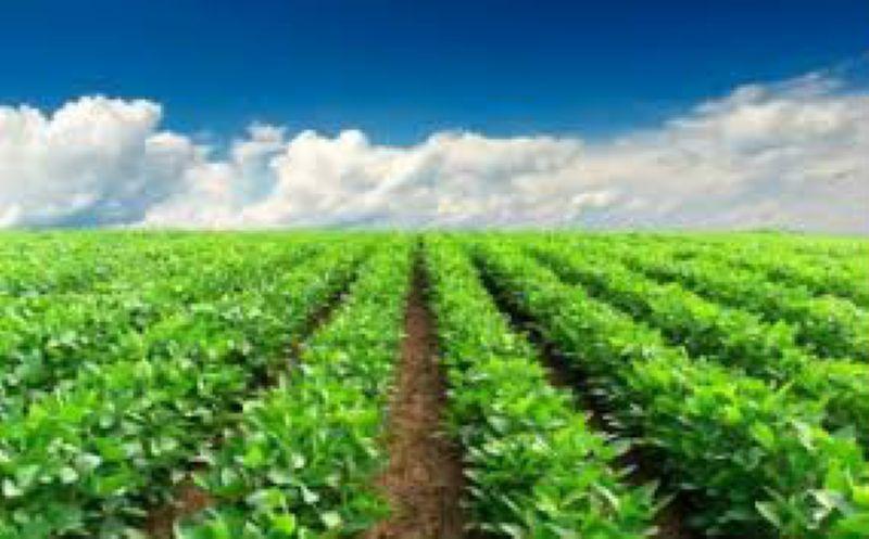 Terreno Agricolo in vendita a Coriano, 9999 locali, prezzo € 6 | CambioCasa.it