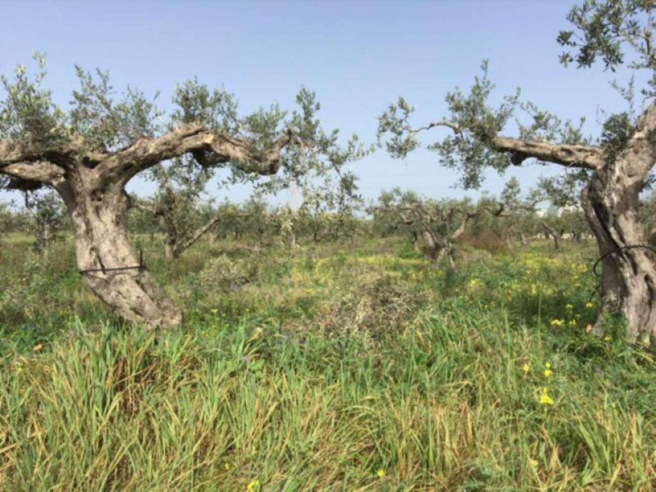 Terreno Agricolo in vendita a Partanna, 9999 locali, prezzo € 220.000 | Cambio Casa.it