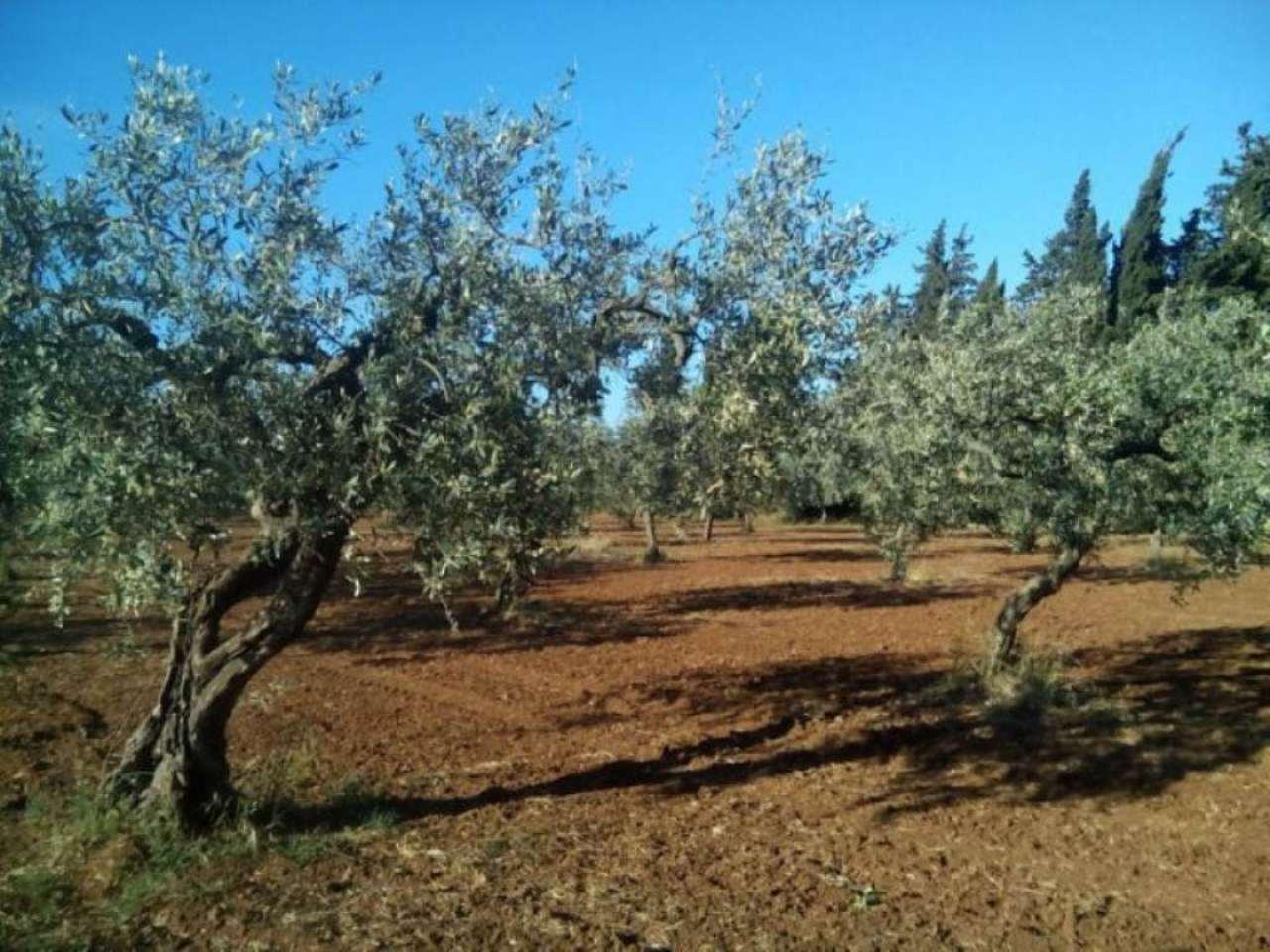 Terreno Agricolo in vendita a Castelvetrano, 9999 locali, prezzo € 20.000 | Cambio Casa.it