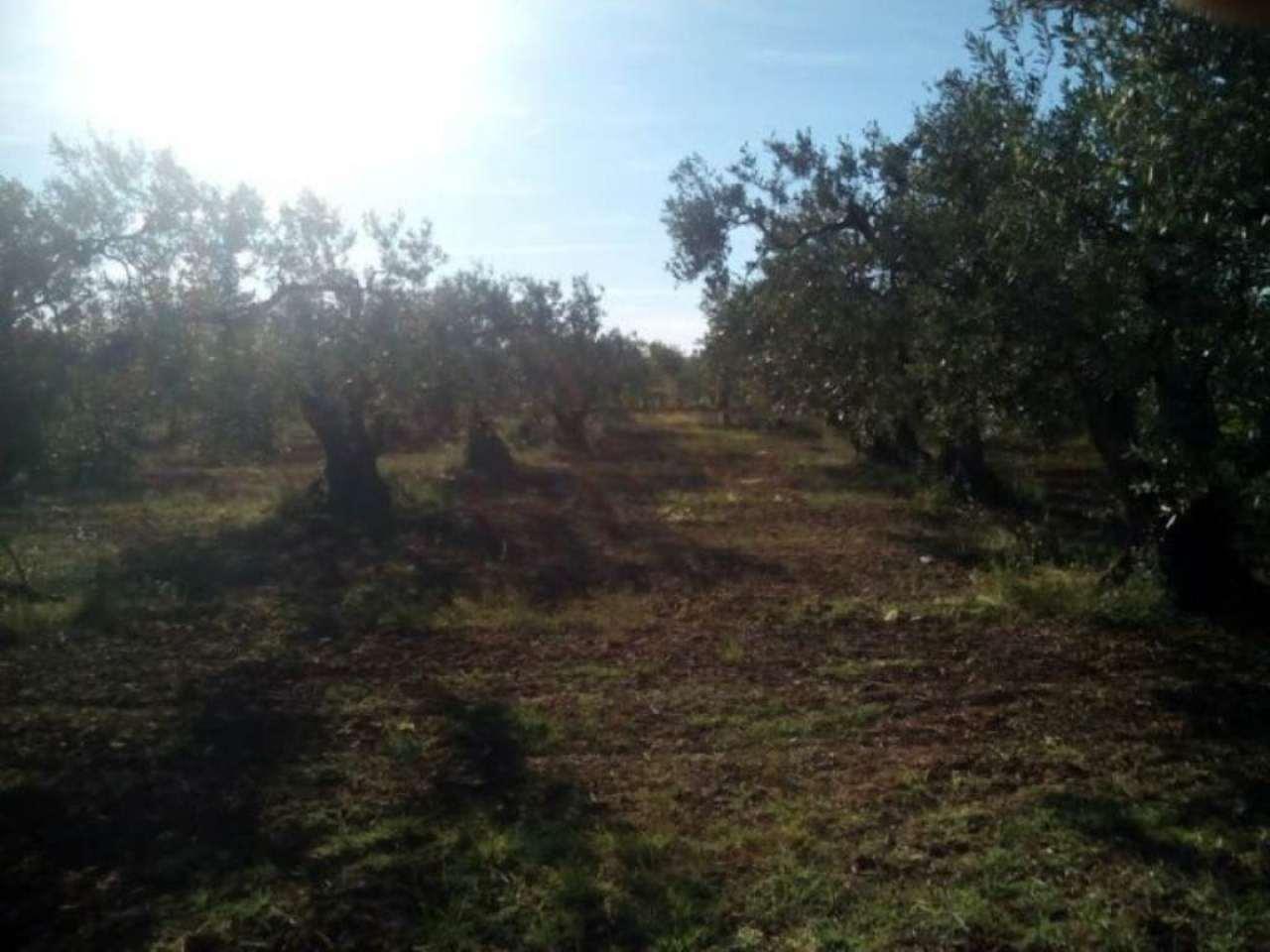 Terreno Agricolo in vendita a Castelvetrano, 9999 locali, prezzo € 35.000 | Cambio Casa.it