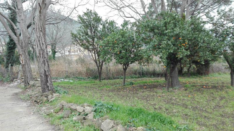 Terreno Agricolo in vendita a Santa Maria a Vico, 9999 locali, prezzo € 20.000 | Cambio Casa.it