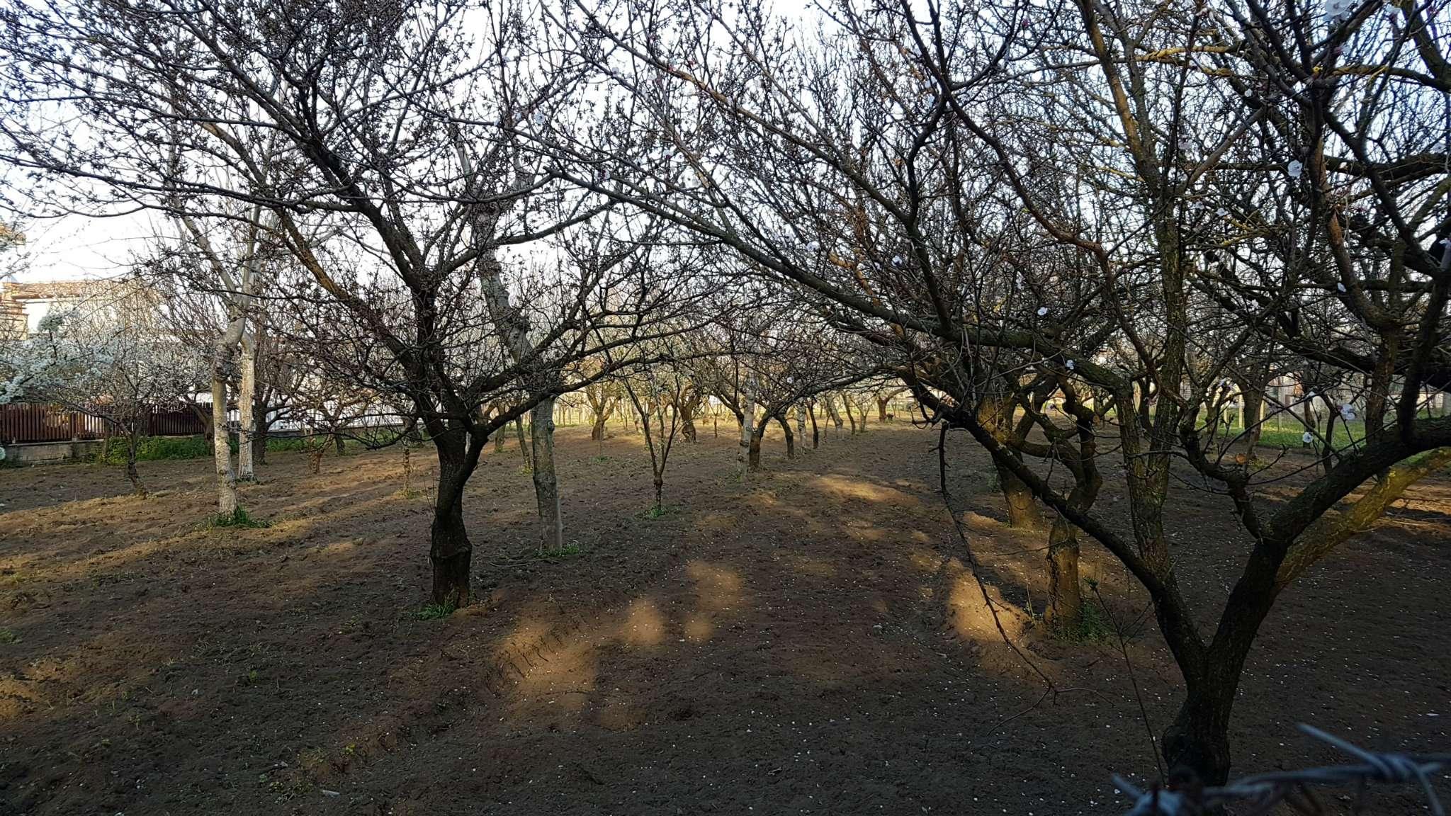 Terreno Agricolo in vendita a Somma Vesuviana, 9999 locali, prezzo € 110.000 | Cambio Casa.it