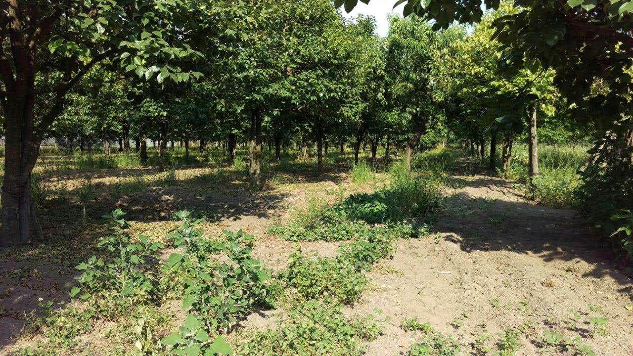 Terreno Agricolo in vendita a Marigliano, 9999 locali, prezzo € 80.000 | CambioCasa.it