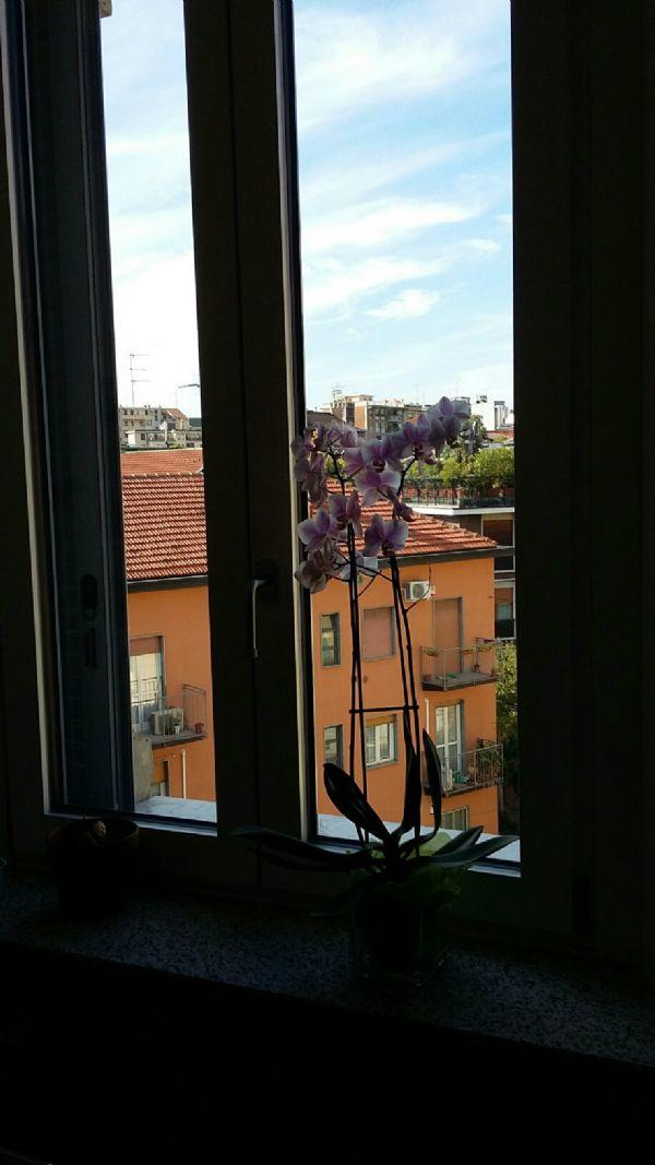 Bilocale Milano Via Coluccio Salutati 5