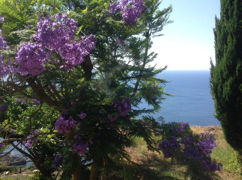 Pantelleria Vendita CASALE / RUSTICO / CASA / CASCINA Immagine 3