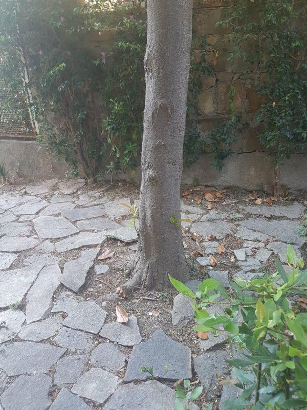Bilocale Sanremo Via P. Semeria 9
