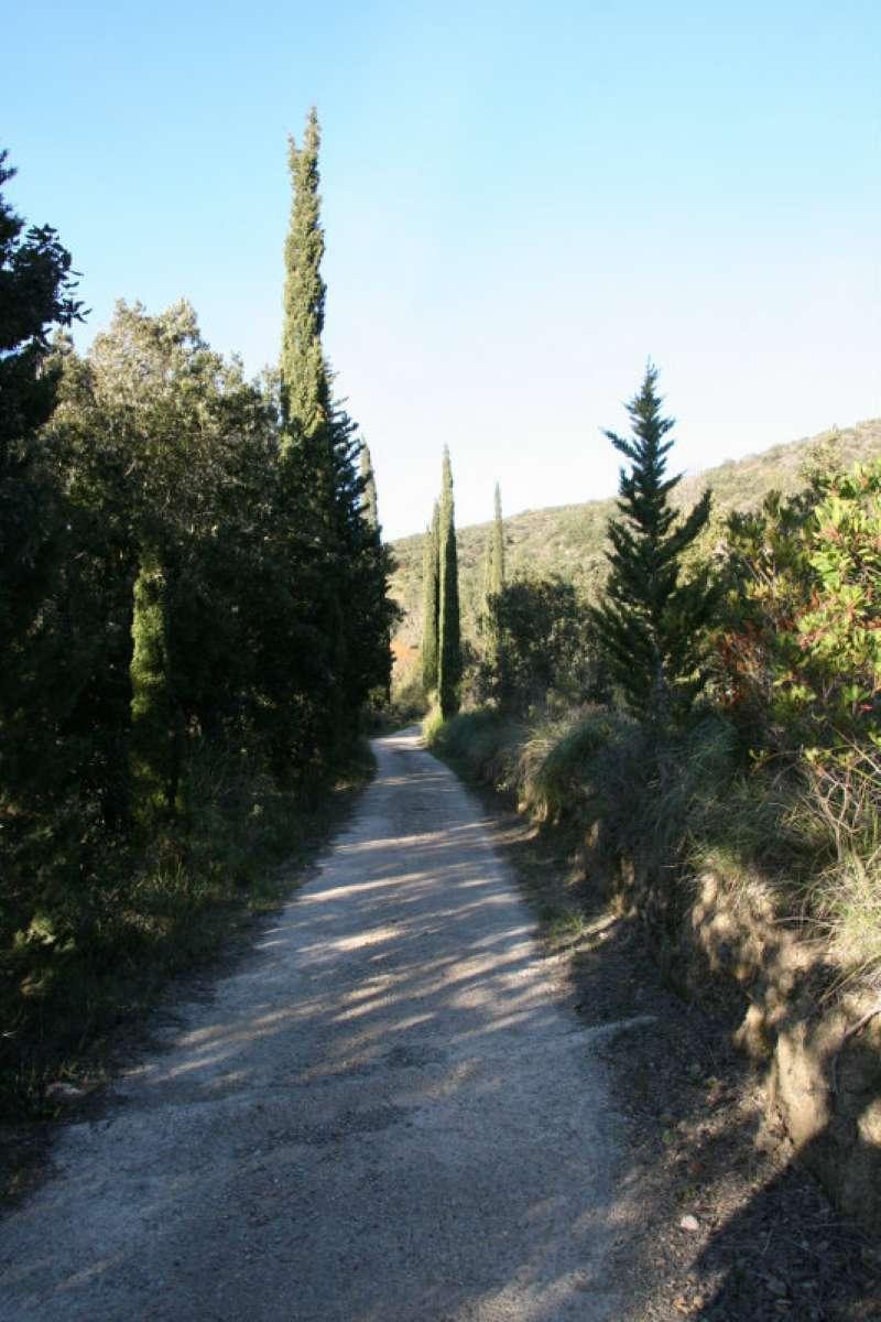 Monte Argentario Vendita CASALE / RUSTICO / CASA / CASCINA Immagine 4