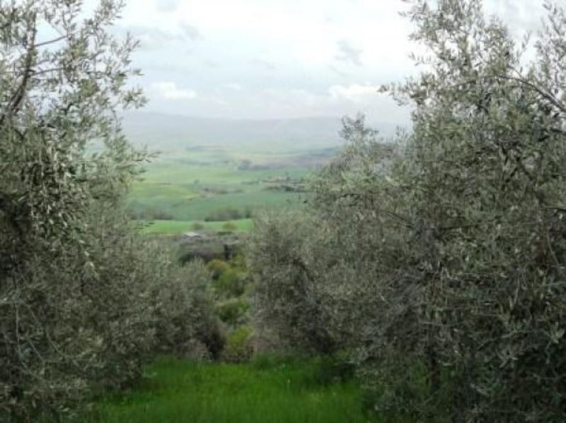 Terreno Edificabile Residenziale in vendita a Chianni, 9999 locali, Trattative riservate | Cambio Casa.it