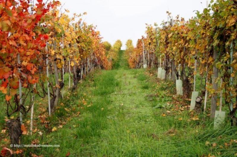 Terreno Agricolo in vendita a Alba, 9999 locali, Trattative riservate | Cambio Casa.it