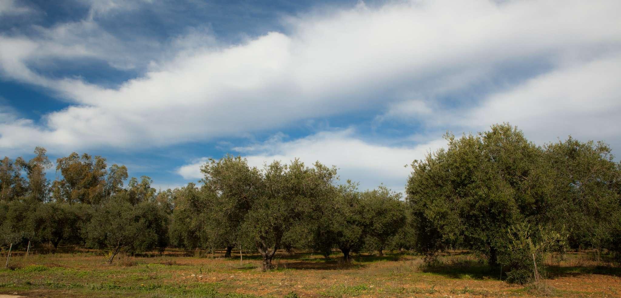 Terreno agricolo in vendita a Villacidro (VS)