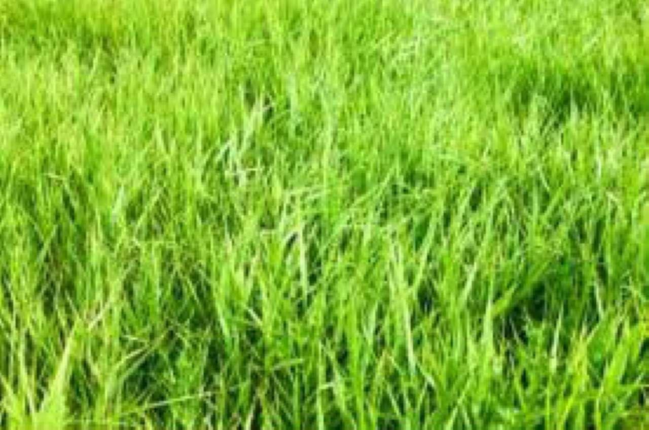Terreno agricolo monolocale in vendita a Lurago Marinone (CO)