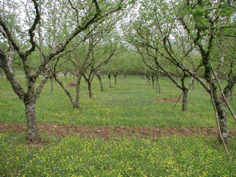 Terreno Agricolo in Vendita a Nola