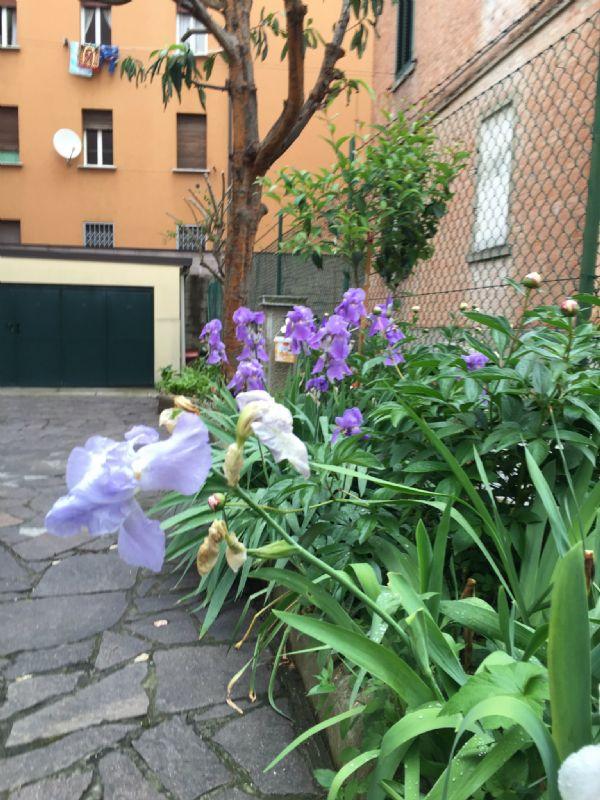 Bologna Affitto APPARTAMENTO Immagine 0