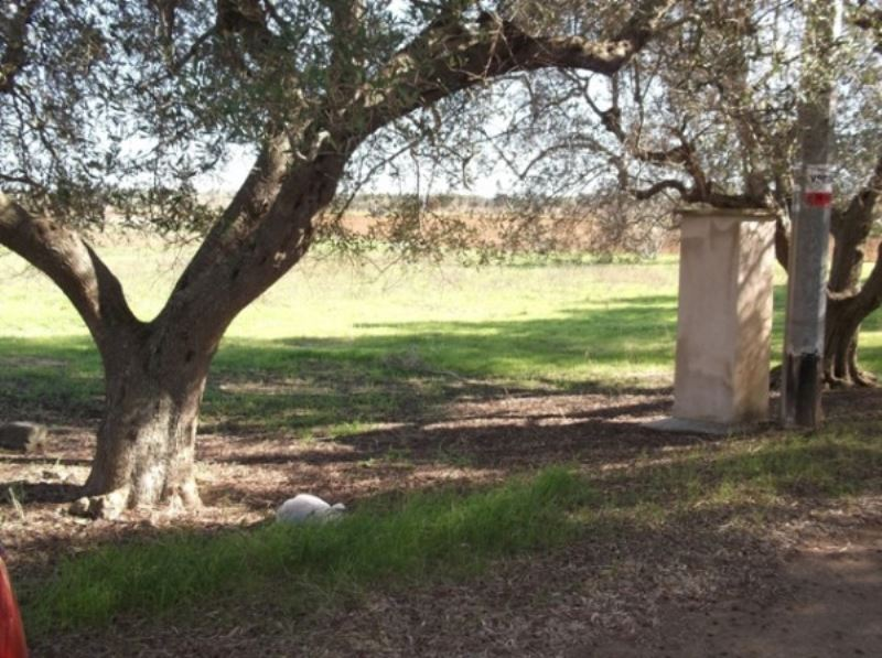 Terreno Edificabile Residenziale in Vendita a Cutrofiano
