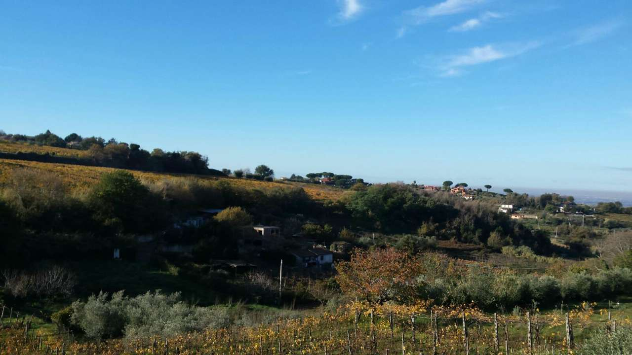 terreno  in Vendita a Grottaferrata