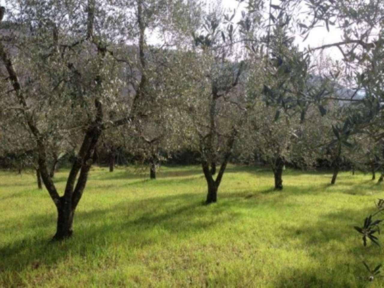 Terreno commerciale in Vendita a Fiesole Periferia: 5000 mq