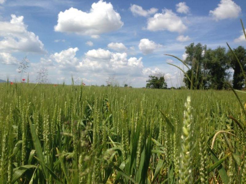 Terreno Agricolo in vendita a Tribano, 9999 locali, prezzo € 195.000 | CambioCasa.it