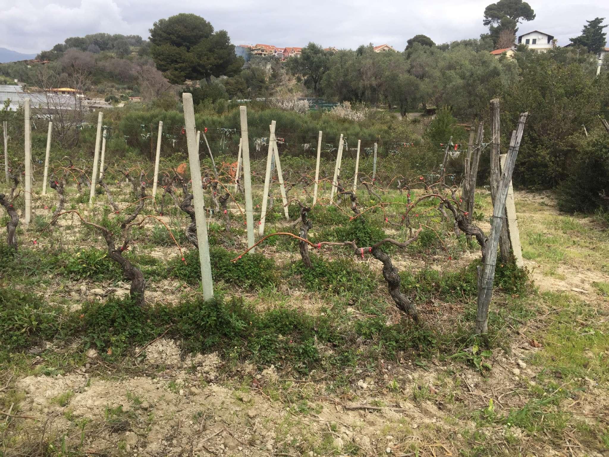 Terreno Agricolo in vendita a San Lorenzo al Mare, 9999 locali, prezzo € 150.000 | Cambio Casa.it