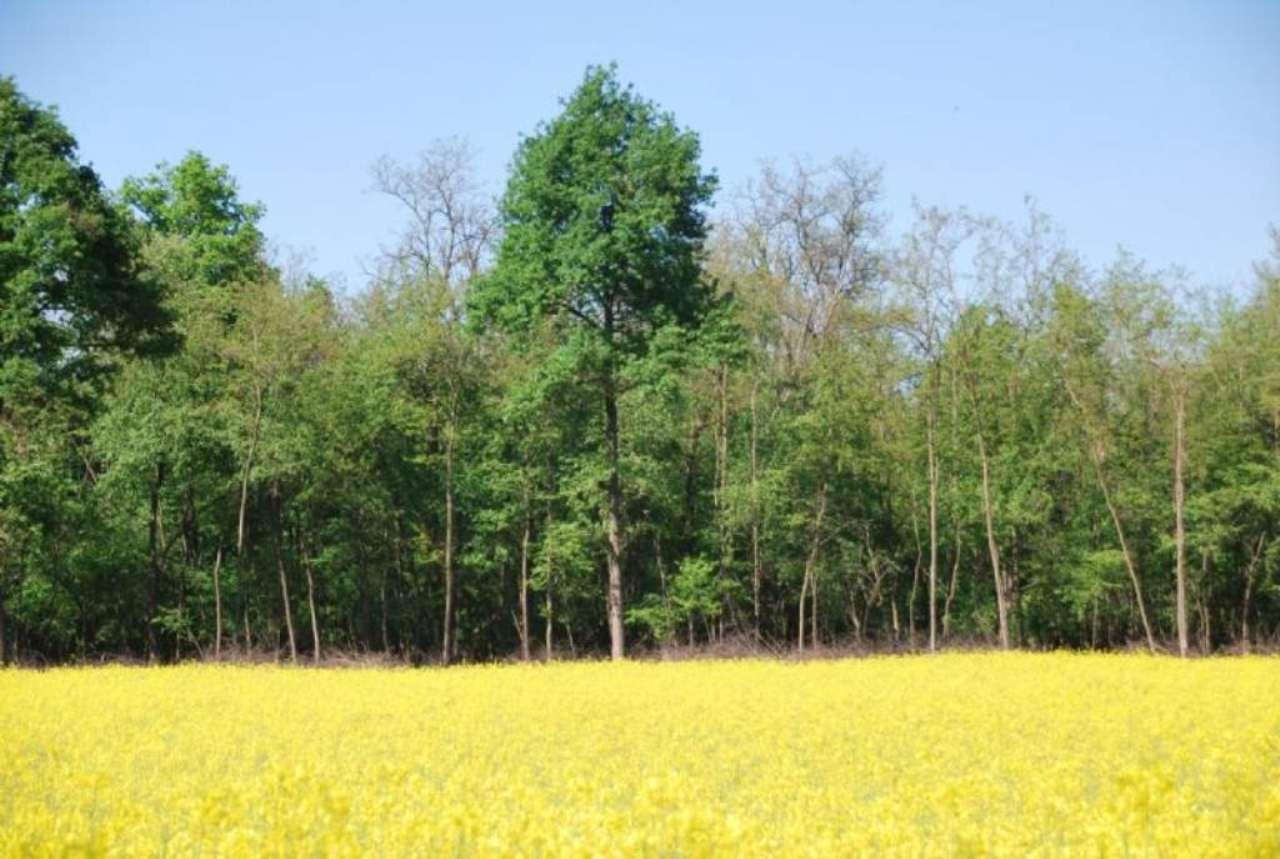 Terreno Agricolo in vendita a Castano Primo, 9999 locali, prezzo € 100.000 | Cambio Casa.it