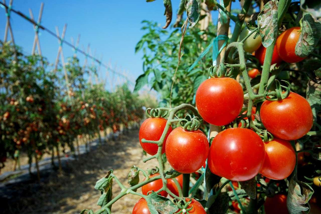 Terreno Agricolo in Vendita a Cesano Maderno