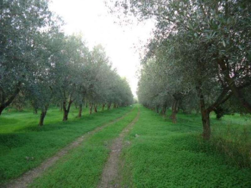 Terreno Agricolo in vendita a Rosolini, 9999 locali, prezzo € 750.000 | Cambio Casa.it