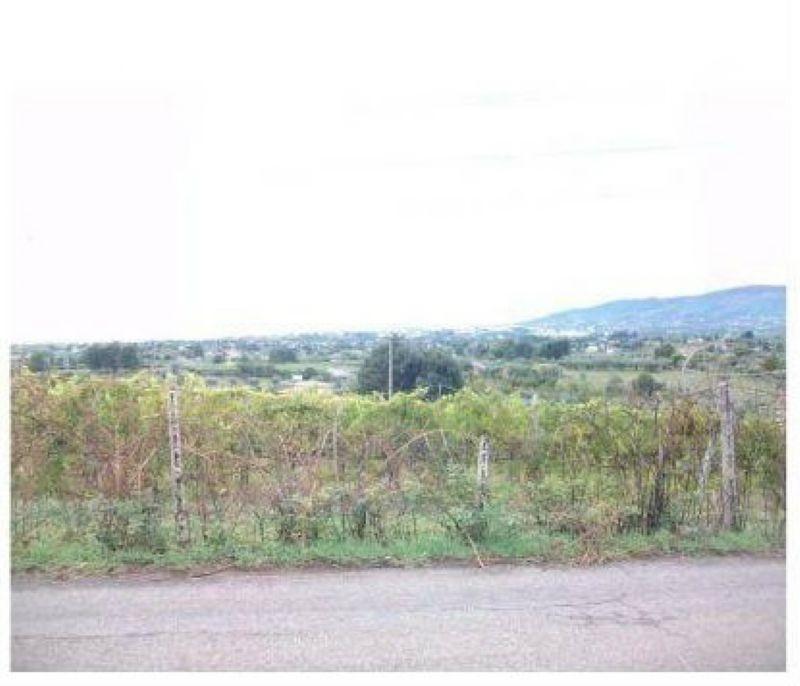 terreno edificabile  in Vendita a Velletri