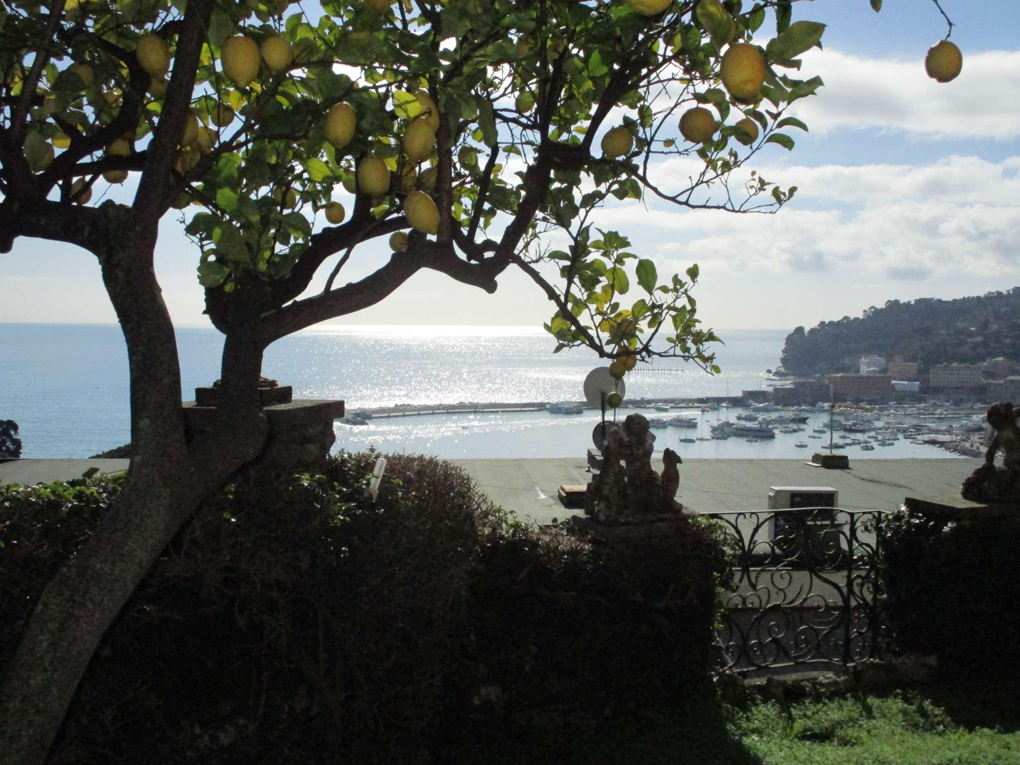 Santa Margherita Ligure Santa Margherita Ligure Vendita APPARTAMENTO » annunci immobiliari, case da affittare a torino