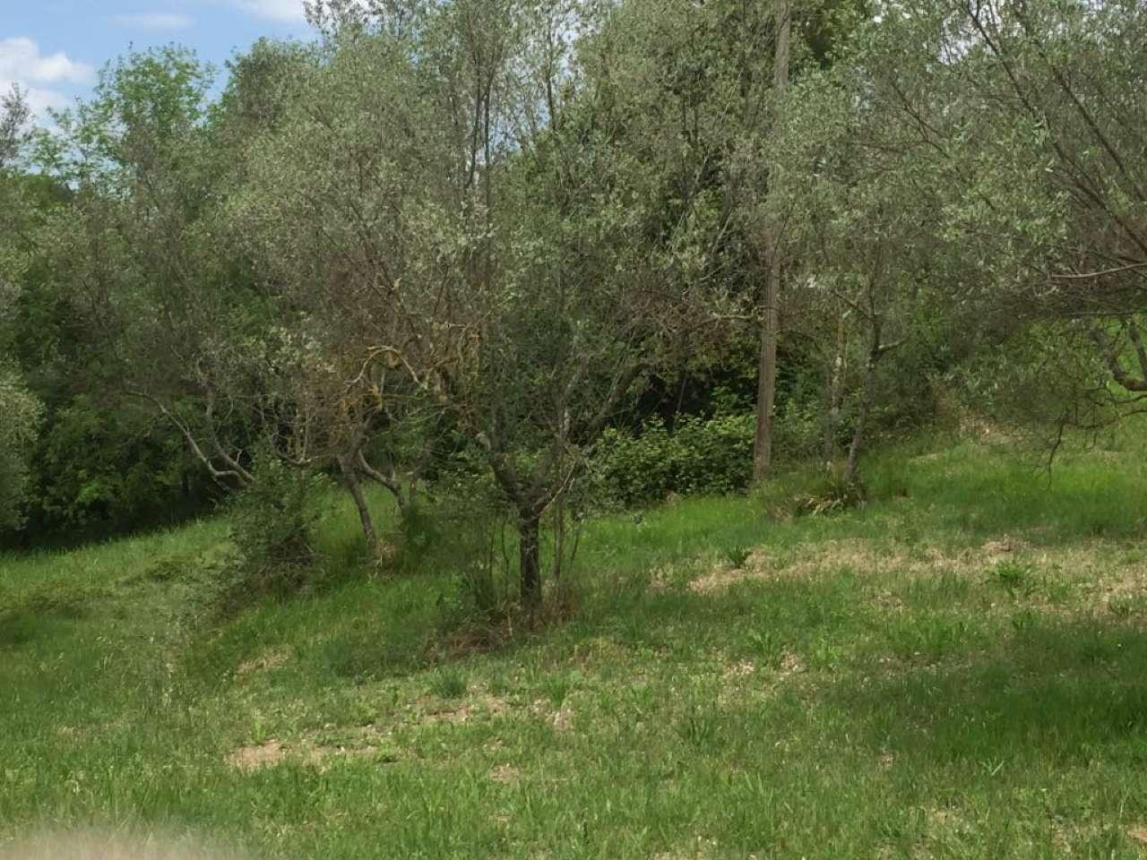 Terreno Edificabile Residenziale in Vendita a Calvi dell'Umbria
