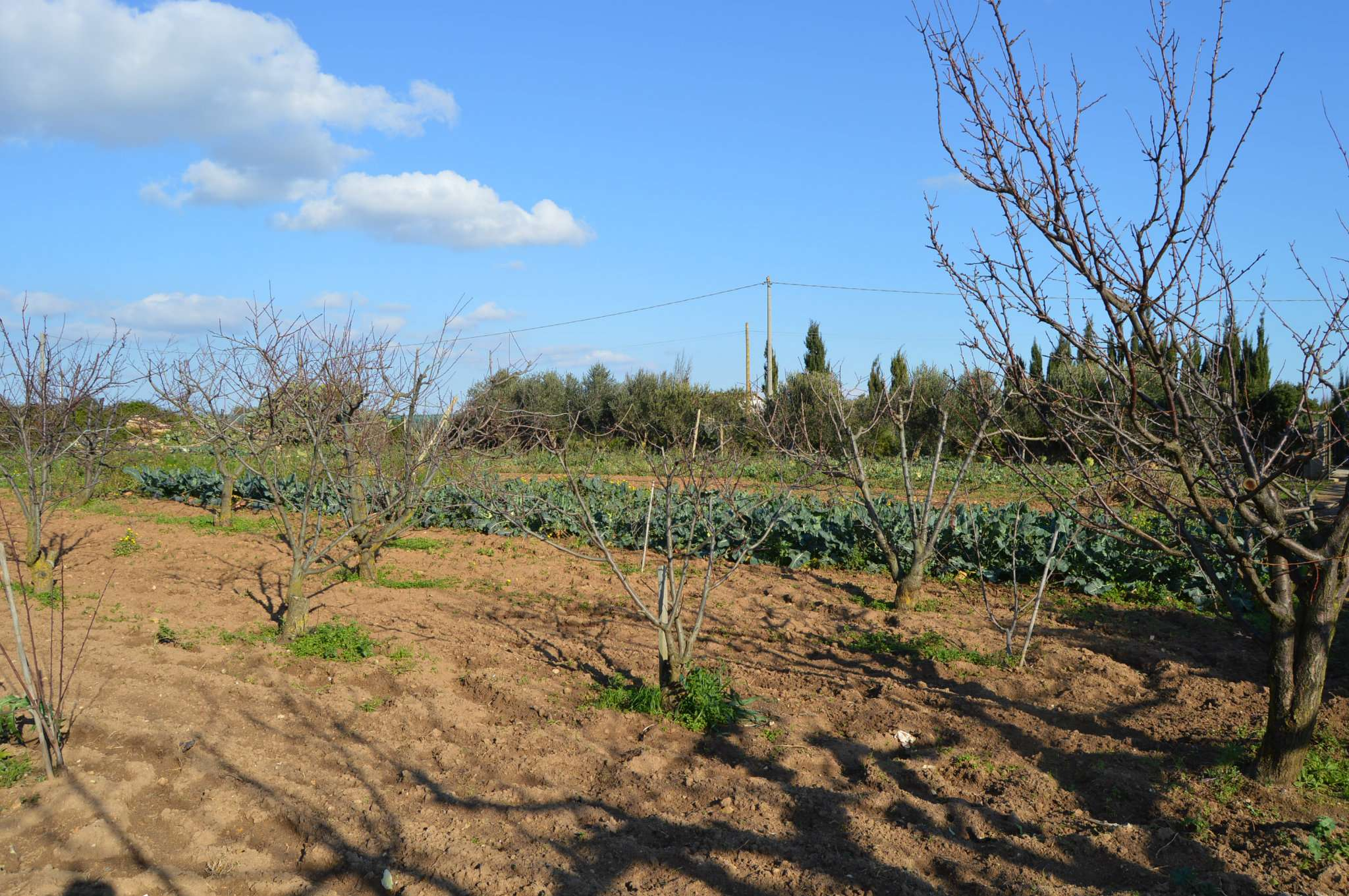 Soluzione Indipendente in vendita a Alghero, 1 locali, prezzo € 40.000 | CambioCasa.it