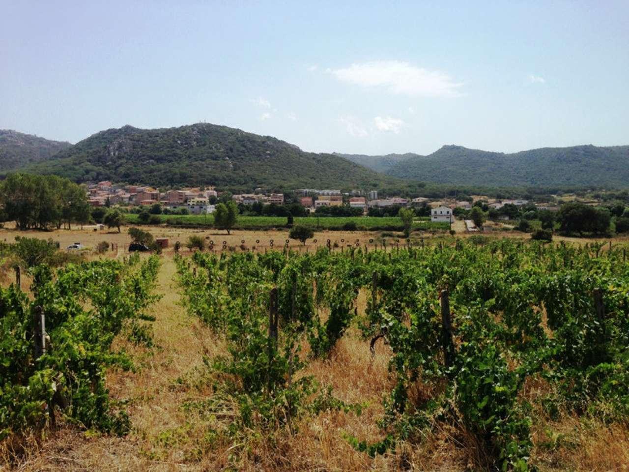 Terreno Agricolo in vendita a Monti, 1 locali, prezzo € 50.000   CambioCasa.it