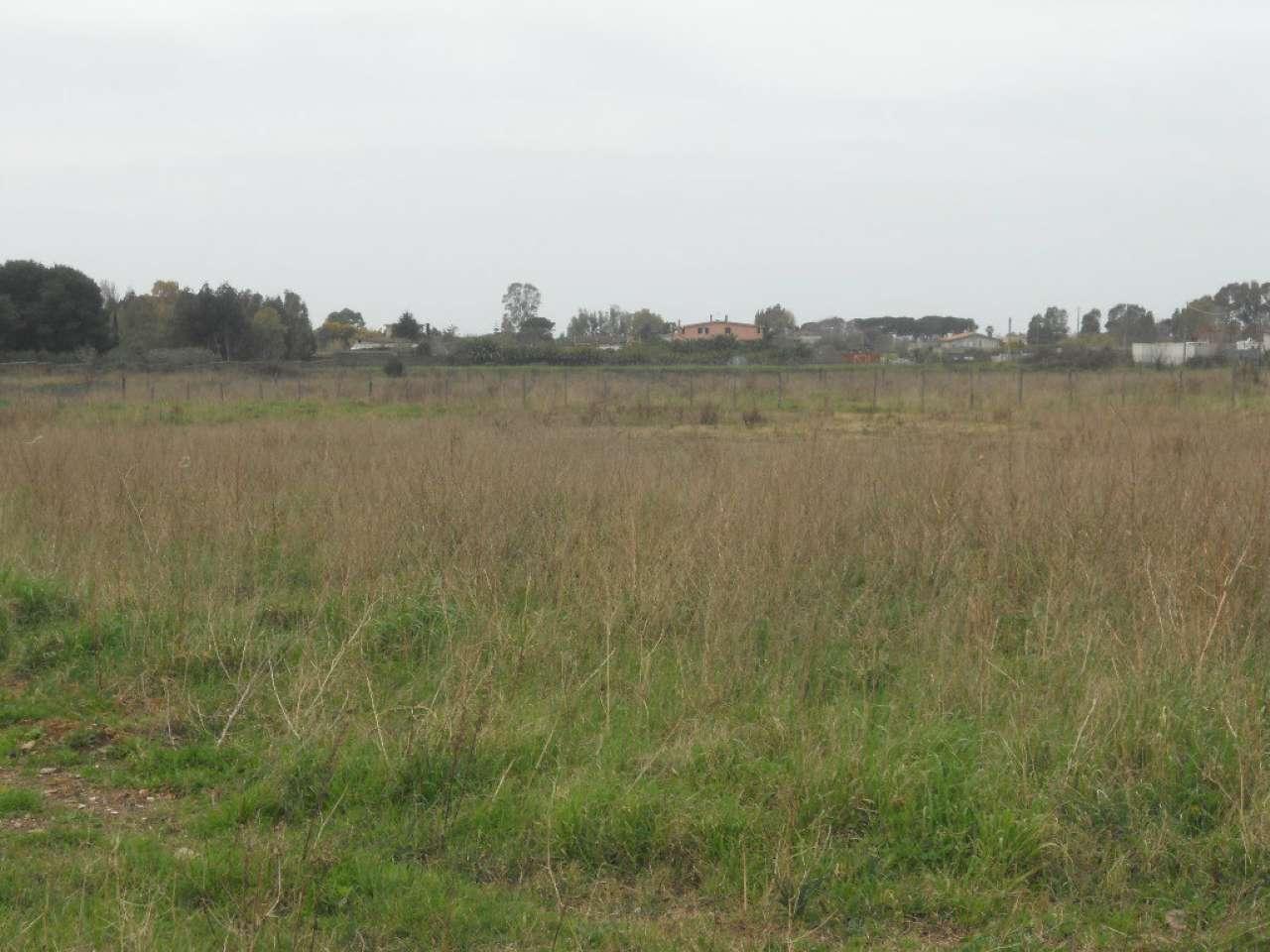 Terreno Agricolo in vendita a Ardea, 1 locali, prezzo € 60.000 | CambioCasa.it