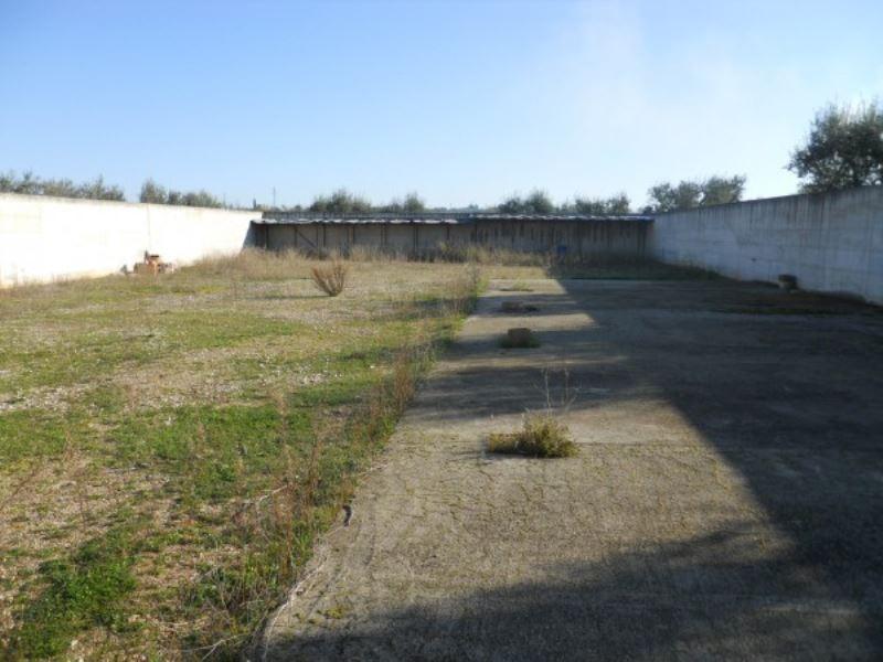 Terreno Agricolo in Affitto a Andria