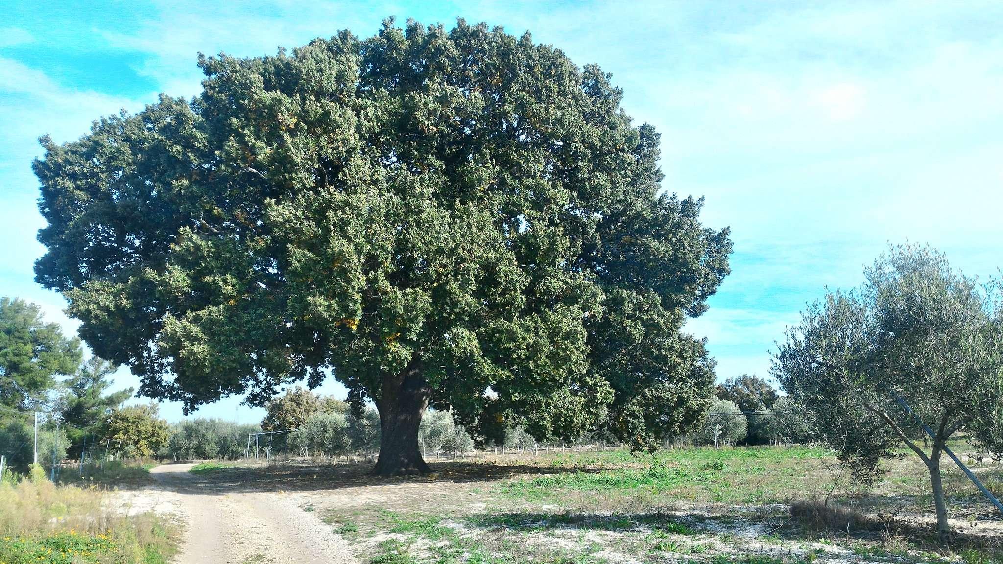 Terreno Agricolo in Vendita a Andria