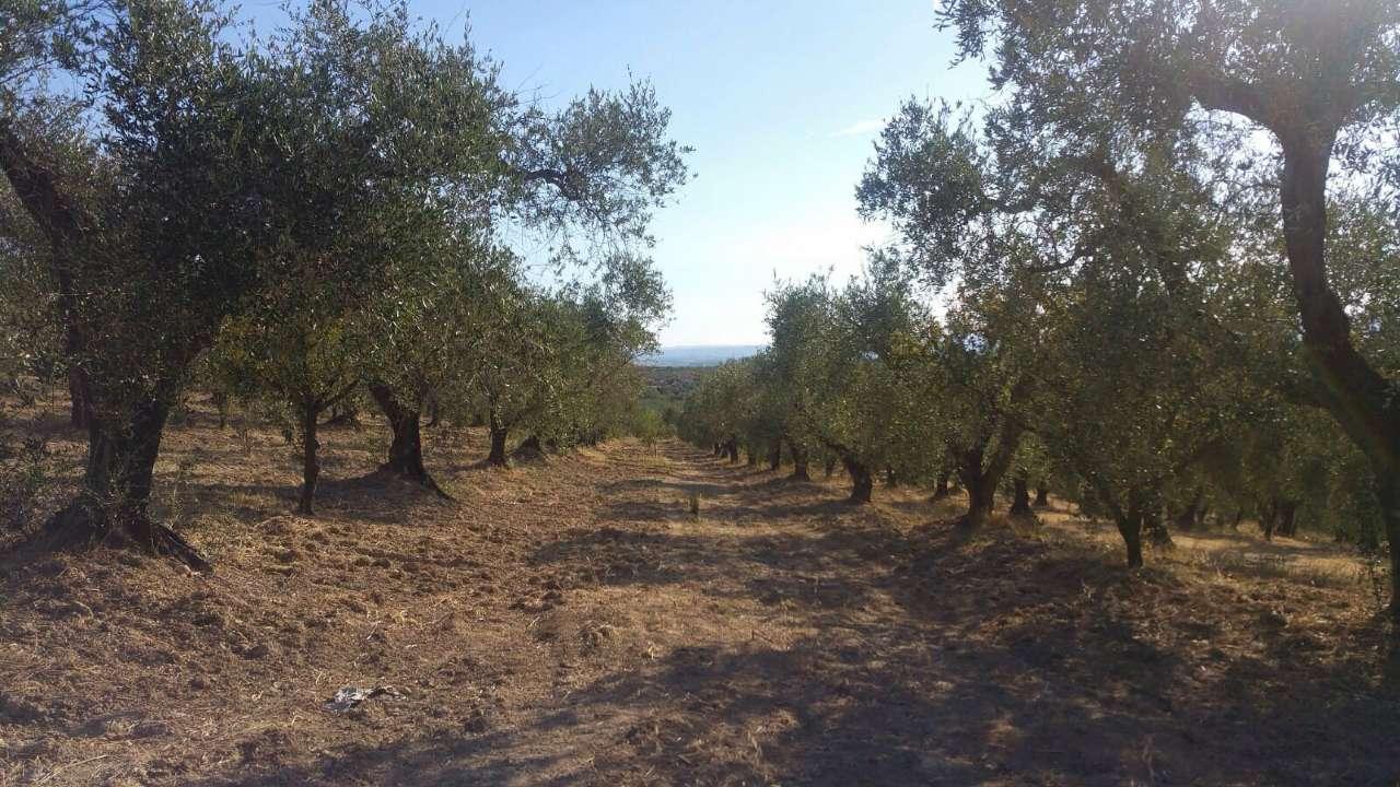 Terreno Agricolo in vendita a Moricone, 1 locali, prezzo € 90.000 | CambioCasa.it