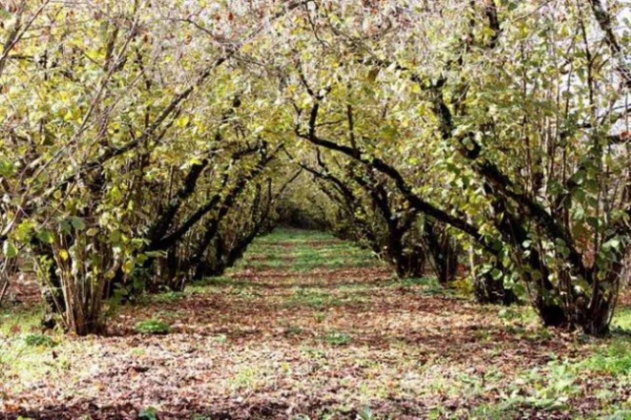 Terreno Agricolo in vendita a Poggiomarino, 9999 locali, prezzo € 85.000 | CambioCasa.it