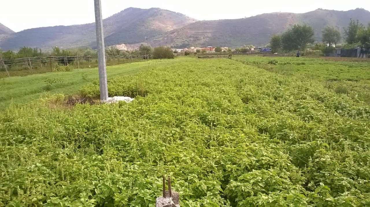 Terreno Agricolo in vendita a San Valentino Torio, 9999 locali, prezzo € 15.000 | CambioCasa.it