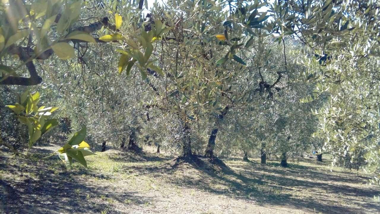 Terreno Agricolo in vendita a Frosinone, 9999 locali, prezzo € 28.000 | CambioCasa.it