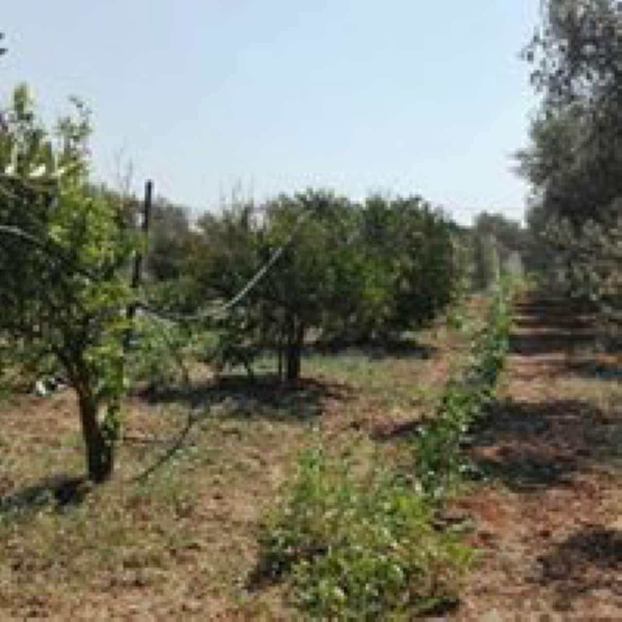 Terreno Agricolo in Vendita a Massafra
