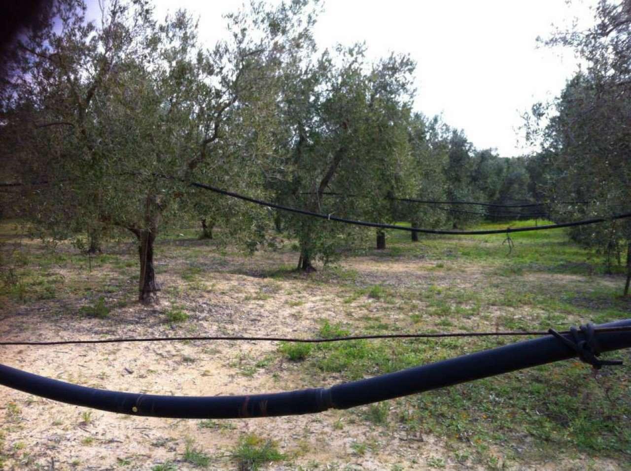 Terreno Agricolo in vendita a Massafra, 9999 locali, prezzo € 10.000 | CambioCasa.it