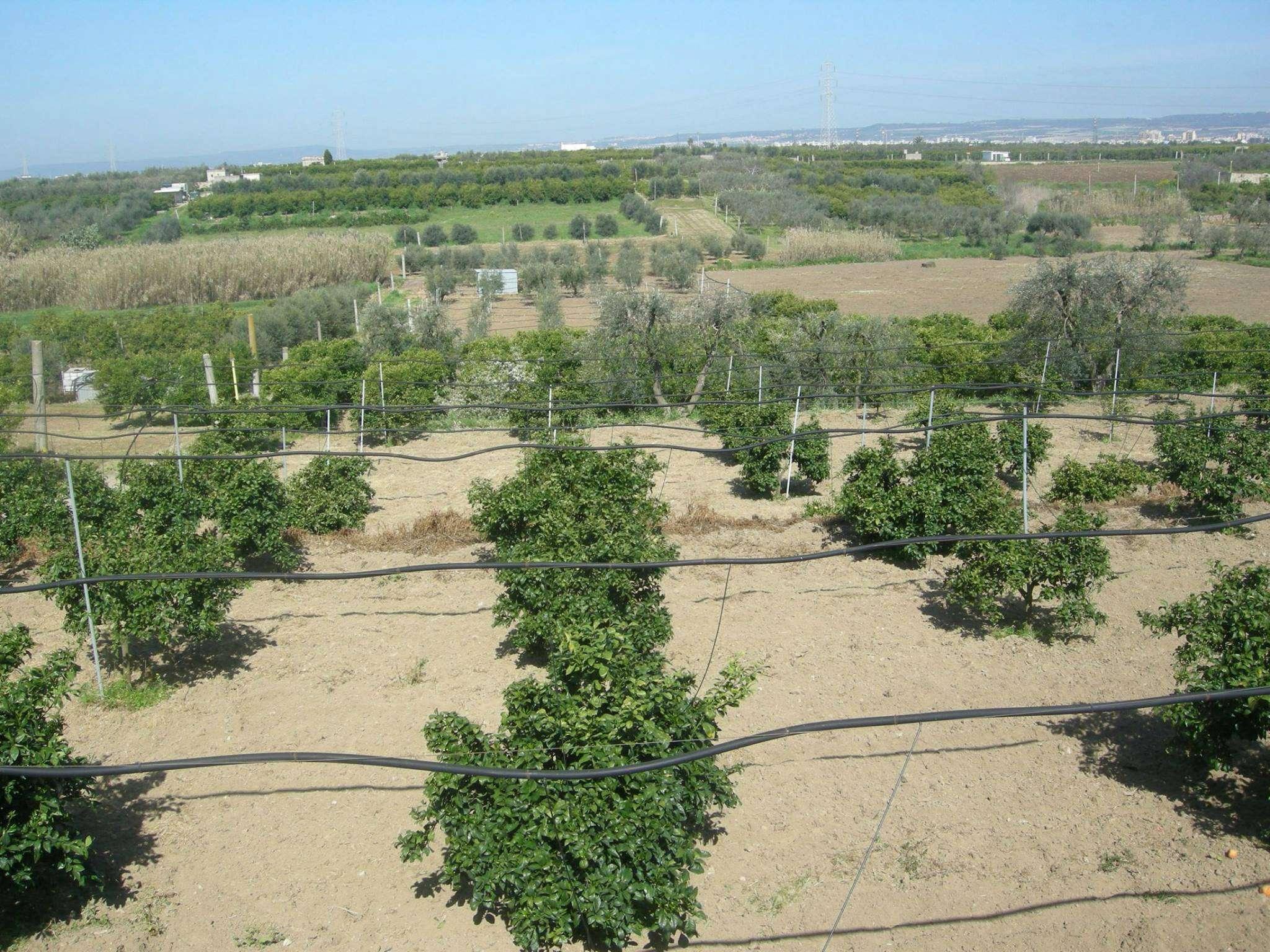 Terreno Agricolo in vendita a Massafra, 9999 locali, prezzo € 18.000 | CambioCasa.it
