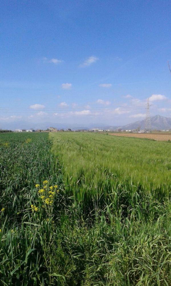 Terreno Agricolo in vendita a Macerata Campania, 9999 locali, prezzo € 29.000 | Cambio Casa.it