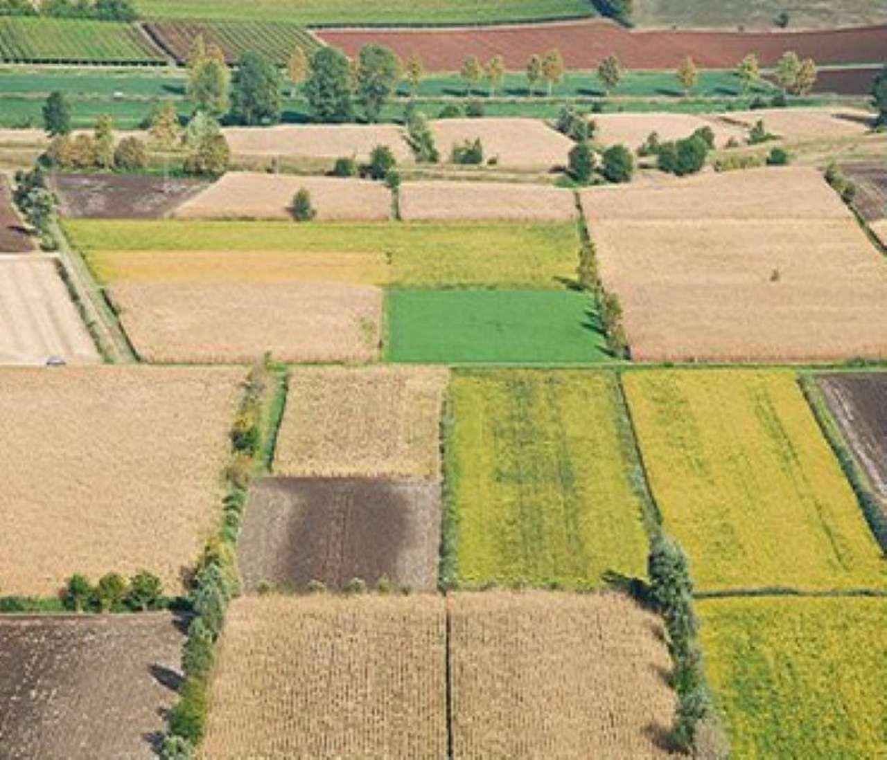 TERRENI AGRICOLI DI DIVERSA METRATURA E NATURA Rif. 6582607