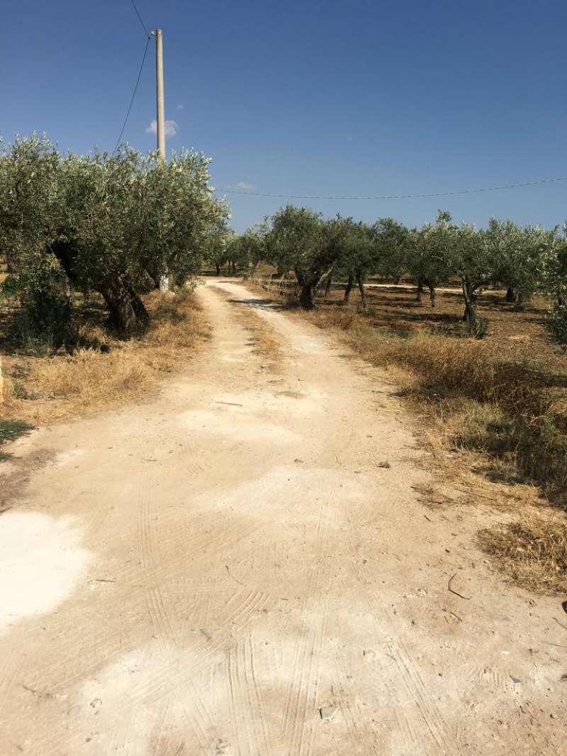 Castelvetrano Terreno Agricolo Con Magazzino Rif. 8986225