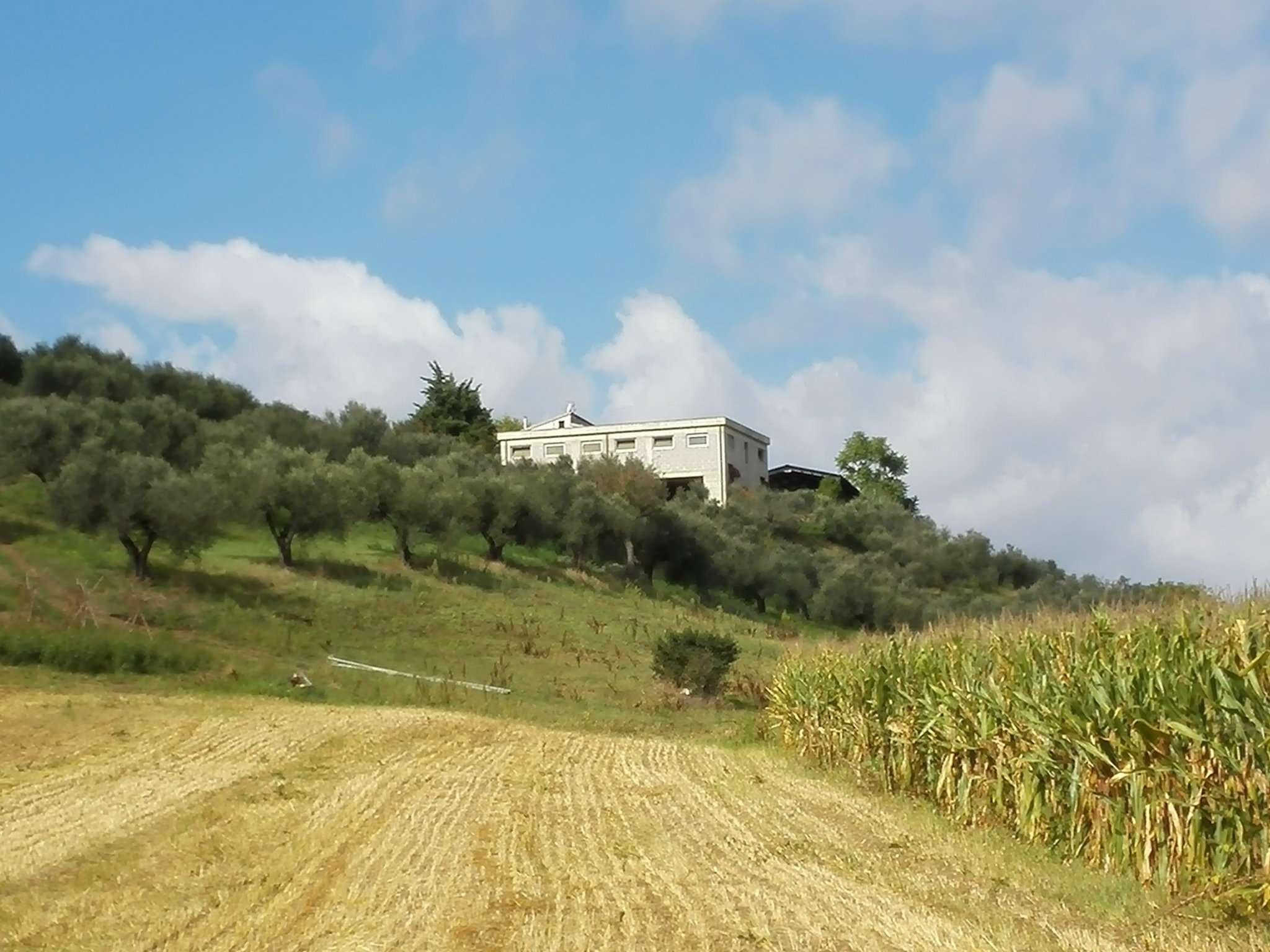 COLLECORVINO CONTRADA CASTELLUCCIO AFFITTASI CAPANNONE AGRICOLO