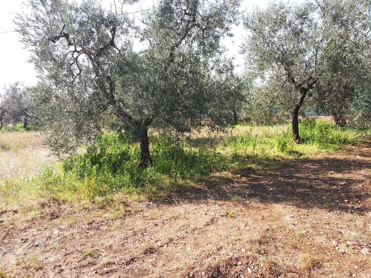 Terreno Agricolo in vendita a Bisceglie, 9999 locali, prezzo € 11.000 | CambioCasa.it