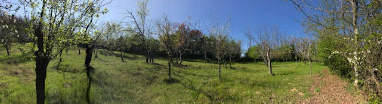 Terreno Agricolo in affitto a Gropparello, 9999 locali, prezzo € 125   CambioCasa.it