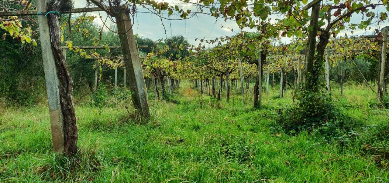 Terreno Agricolo in vendita a Monte Porzio Catone, 9999 locali, prezzo € 490.000 | CambioCasa.it