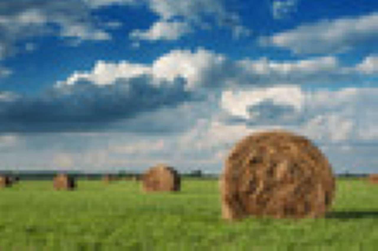 terreno agricolo seminativo irriguo di 33 ettari in corpo unico