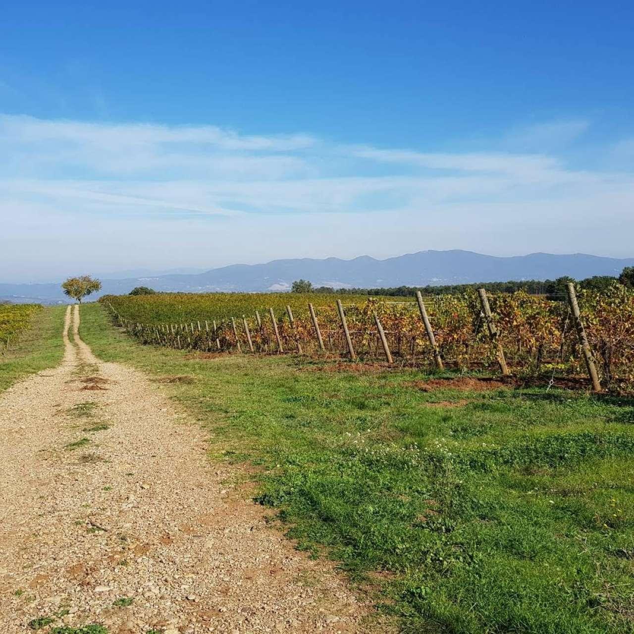 Terreno Agricolo in vendita a Orvieto, 10 locali, prezzo € 3.500.000 | PortaleAgenzieImmobiliari.it